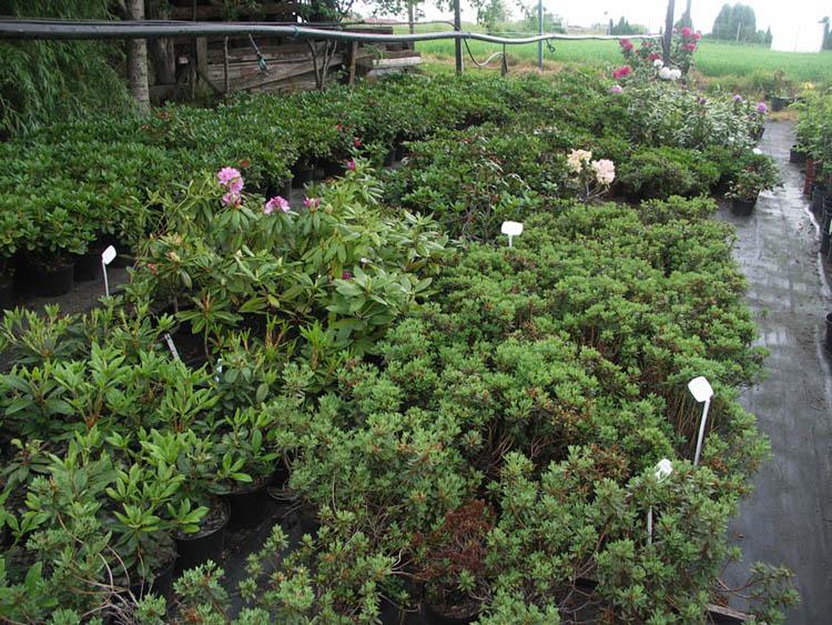 Nasze rośliny